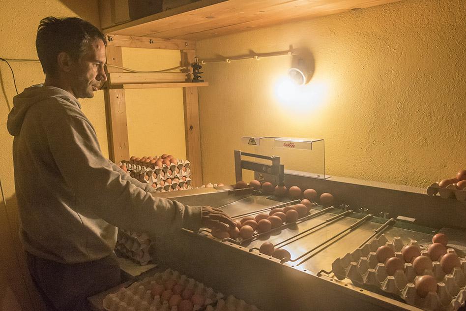 Kmetija ZAKRAŠNIK - sortiranje jajc